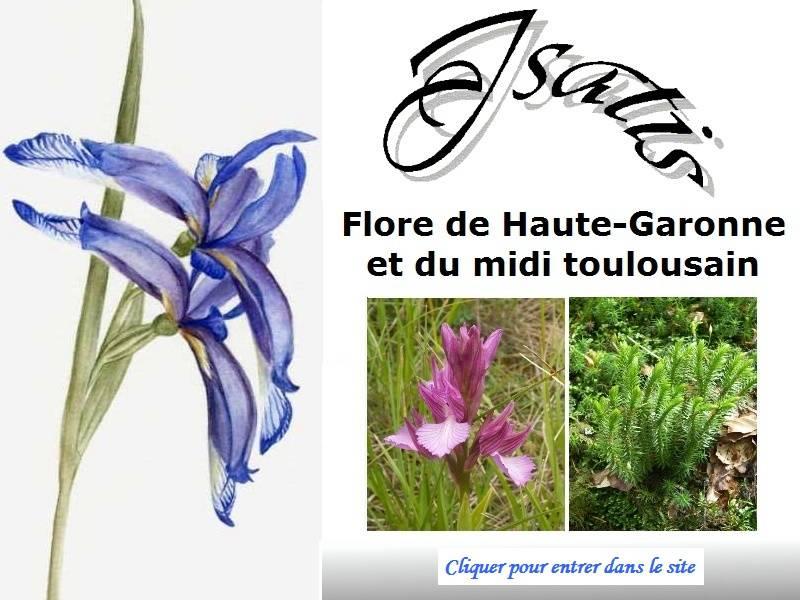 31 - eFlore 31